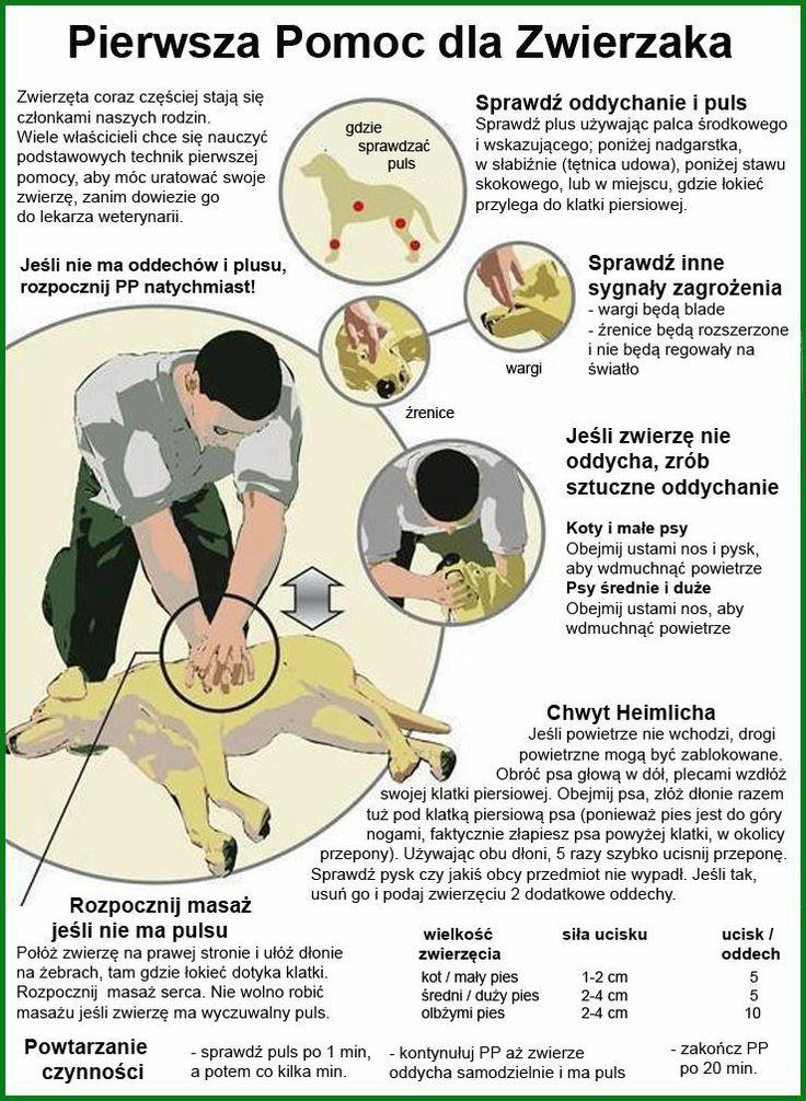 Pierwsza pomoc dla psów