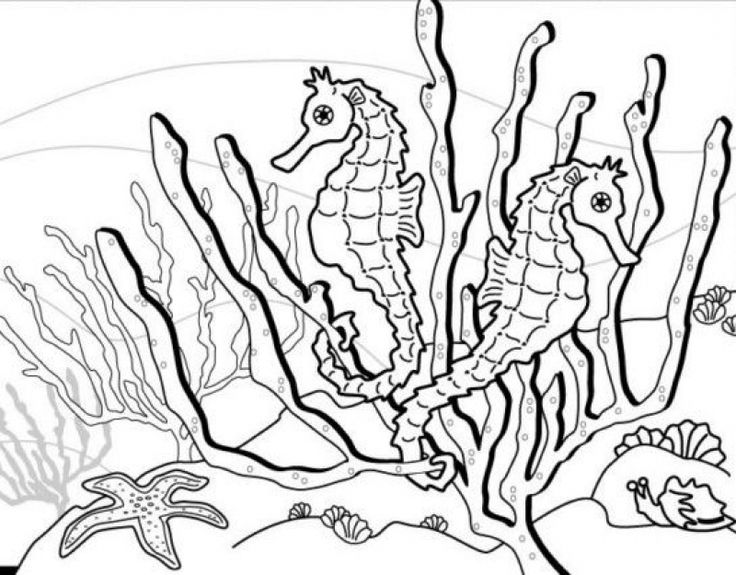 316 best animal coloring pages images on pinterest | animal ... - Cute Baby Seahorse Coloring Pages