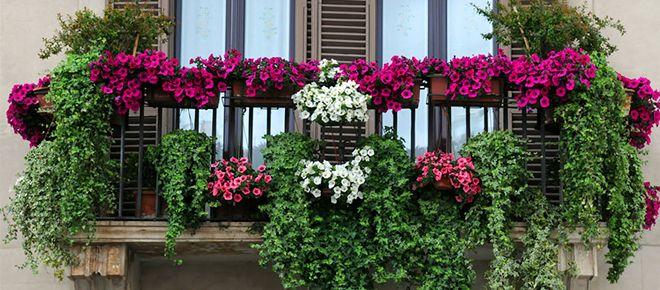 ¡¡Nuestro balcón decorado para verano!!  Clic: https://www.jardineriakuka.com/blog/agenda/los-balcones-en-verano.html  #balcon #decoracion #plantas #plantasconflor