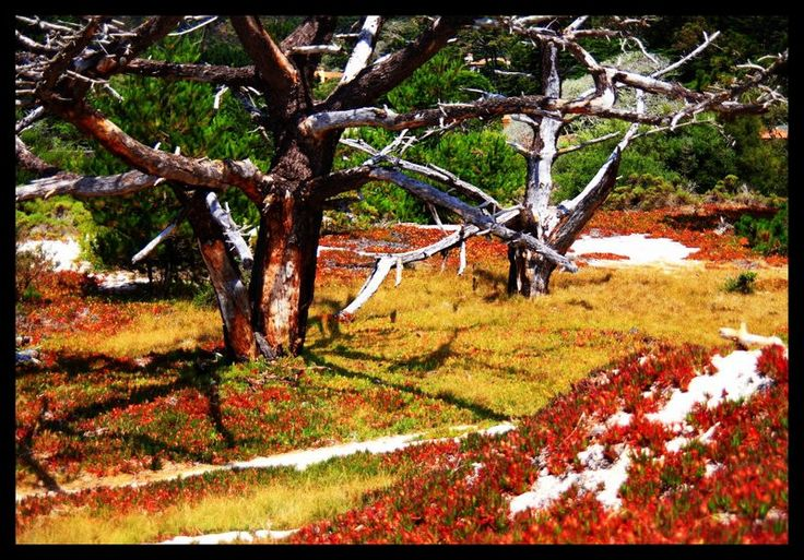 Sand and Fall Colors with the Cyprus Tree