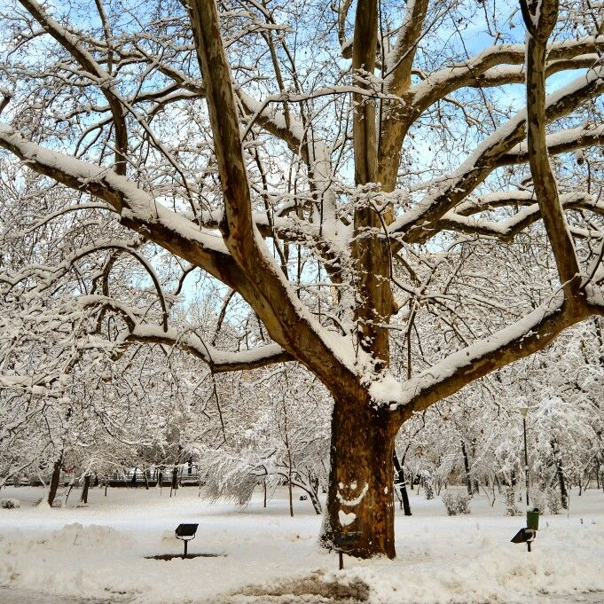 Cismigiu garden in Bucharest, under snow