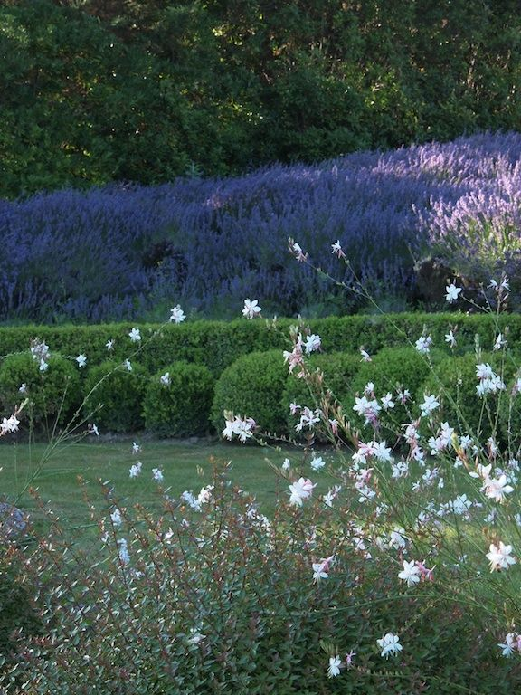 Provence. The Alpilles and Lavender -