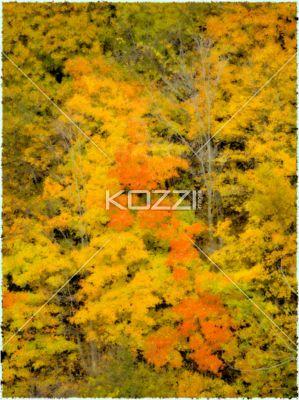 Autumn Trees - Autumn trees in Ontario, Canada