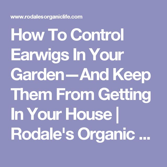 How To Control Earwigs In Your Garden—And Keep Them From Getting In Your House | Rodale's Organic Life