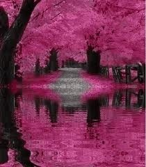 wow: Pink Pink Pink, Pink Trees, Color, Beautiful Landscape, Hot Pink, Places, Pretty, Mothers Natural, Pink Black