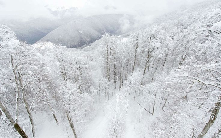 Snow-covered trees and mountains are pictured above Rosa Khutor, one of the 2014 Winter Olympics venues, in the Black Sea city of Sochi  Picture: LEON NEAL/AFP/Getty Images