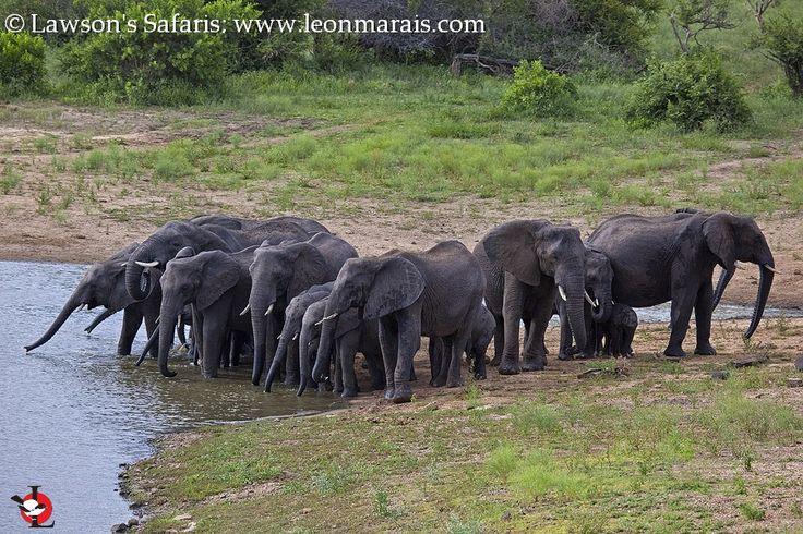 66 best Greater Kruger National Park Discoverer. images on ...