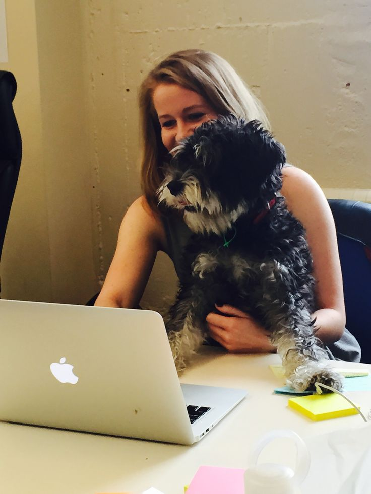 Eddy made his first appearance in the office today! #BringYourDogToWork #CollectLife