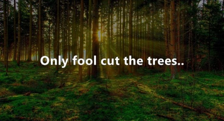 http://www.natureaxis.com/2016/09/eye-opening-slogans-on-save-trees/
