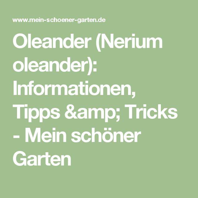 die besten 25 oleander schneiden ideen auf pinterest oleander vermehren oleander pflege und. Black Bedroom Furniture Sets. Home Design Ideas