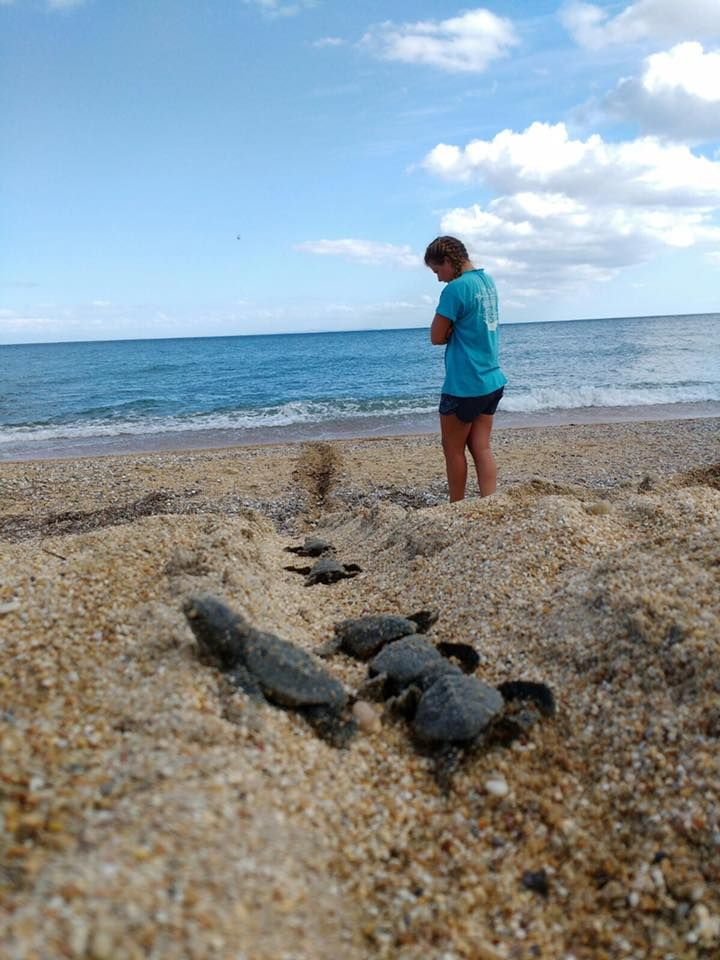 Assist with Sea Turtle Conservation in Greece this summer!