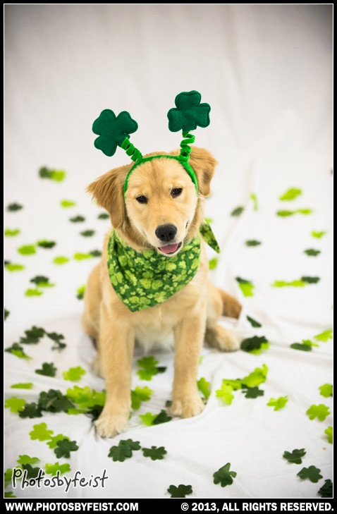 Cute Wallpaper St Pattys Day Pupppy 39 Best St Patrick S Day Pets Images On Pinterest Being
