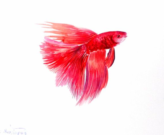 Betta fighting fish original watercolor painting by for Betta fish painting