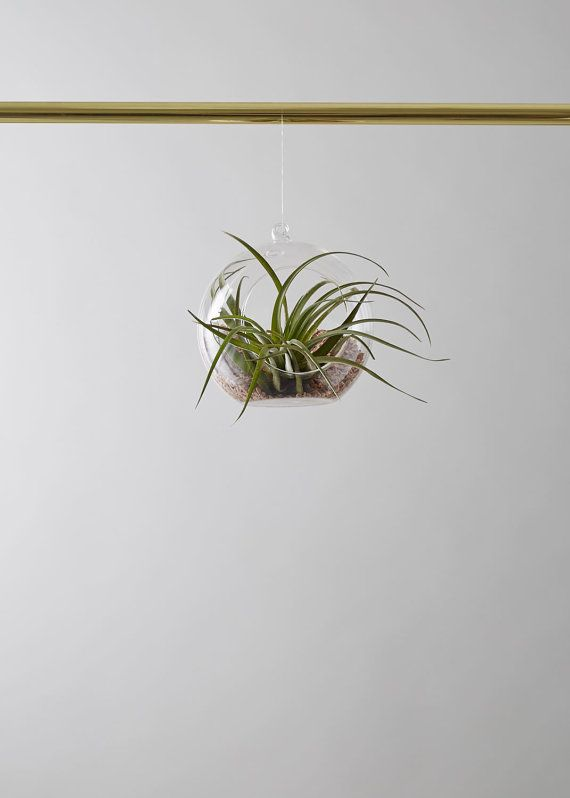 Glass Air Plant Hanger by geofleur on Etsy