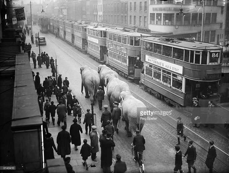 A procession of elephants appearing in local theatre make their way along the street at Elephant and Castle, south London.