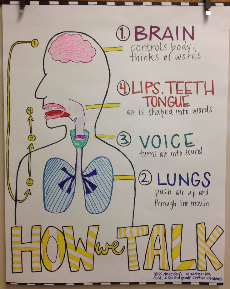 Anatomy of speech
