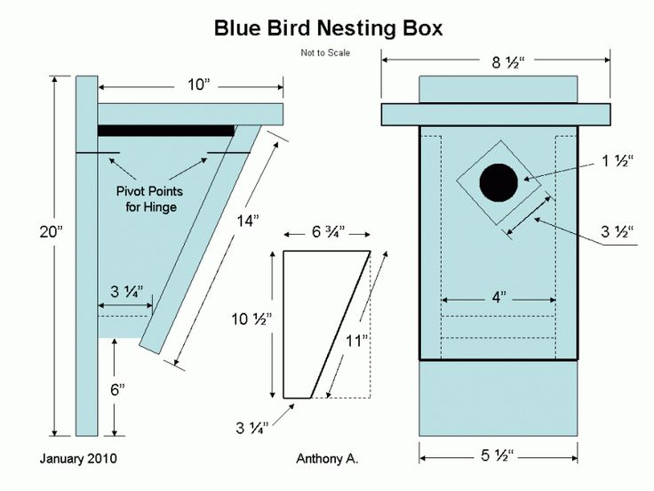 Eastern Bluebird House Plans Nest Box
