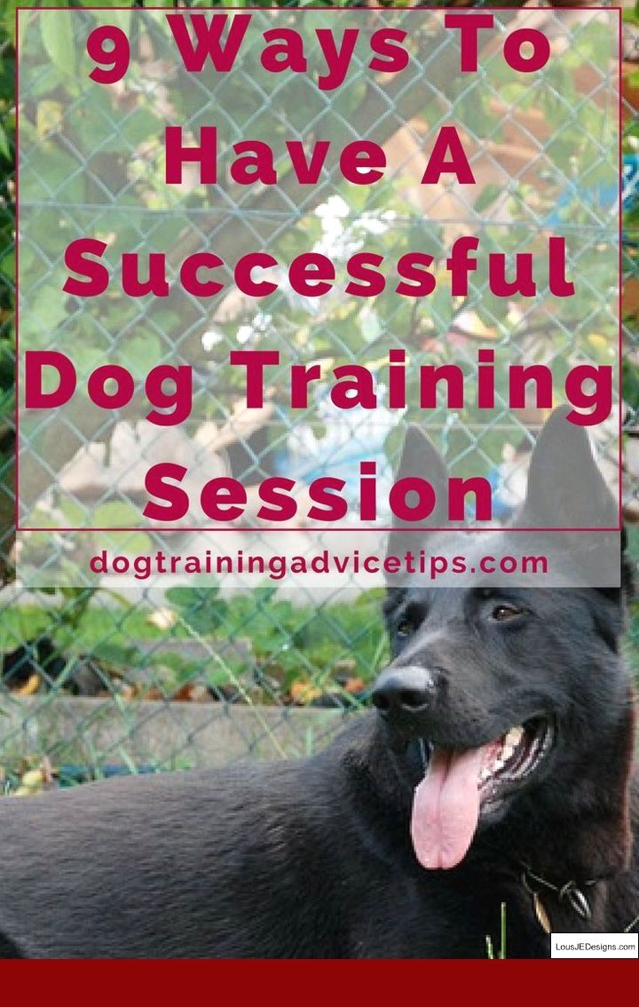 Tips Potty Training Older Puppy And Pics Of How Do You Teach A Dog