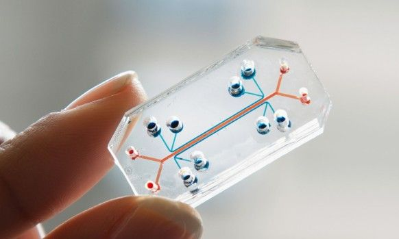 career: A Chip That Mimics Human Organs Is the Design of the Year  Called Organs-On-Chips, it's exactly what it sounds like: A microchip embedded with hollow microfluidic tubes that are lined with human cells, through which air, nutrients, blood and infection-causing bacteria could be pumped. These chips get manufactured the same way companies like Intel make the brains of a computer. But instead of moving electrons through silicon, these chips push minute quantities of chemicals past cells…