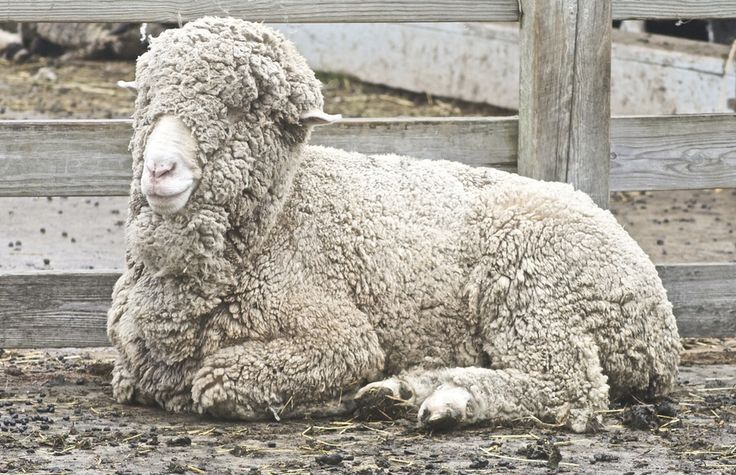 Here's To The Amazing Animals Who Give Us Yarn