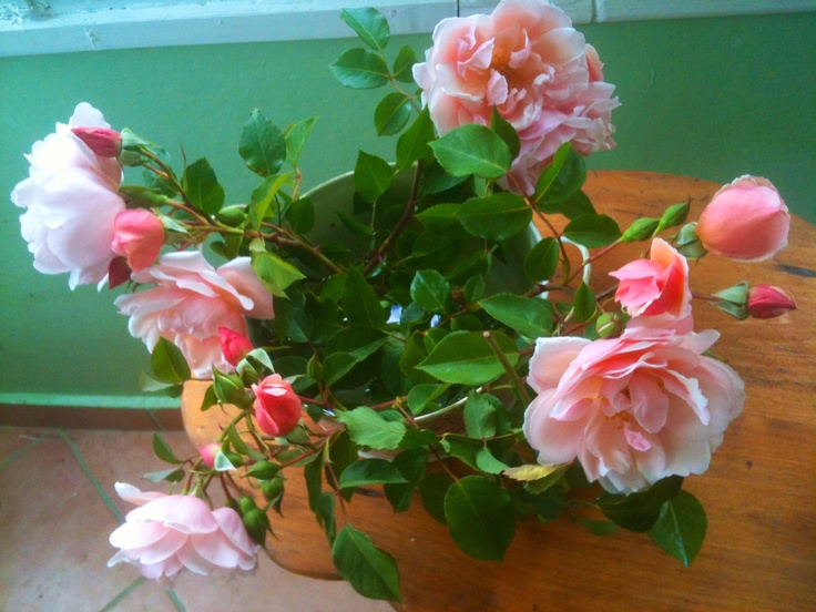 Roses anciennes. Photo by Thalia.P.