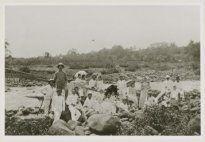 1899  Kalimati, Batang