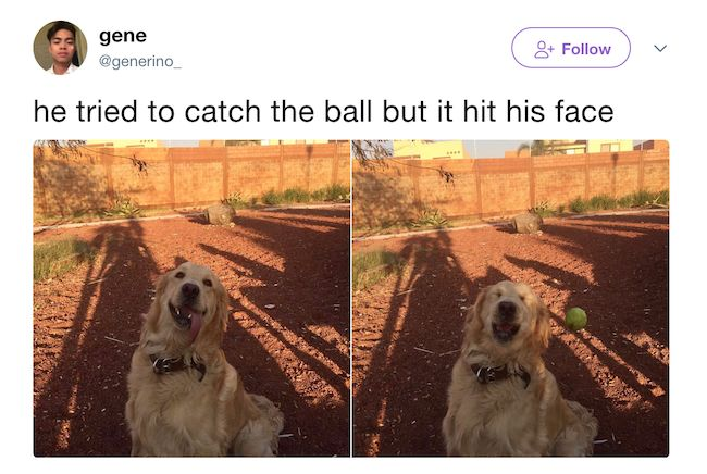 The 20 Best Funny Pictures Of Today's Internet