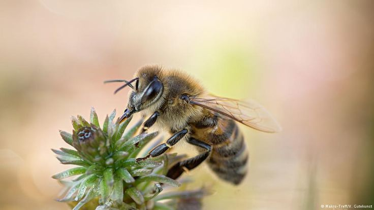 Pesticides may be lowering sperm count of bees | News | DW.COM | 27.07.2016