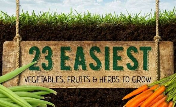 Easiest Vegetables Fruits And Herbs To Grow 400 x 300