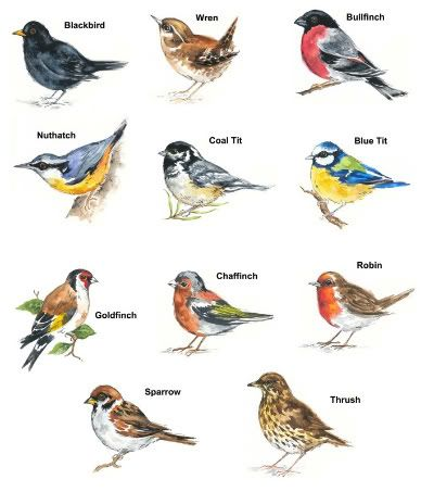 Bird Pictures With Names