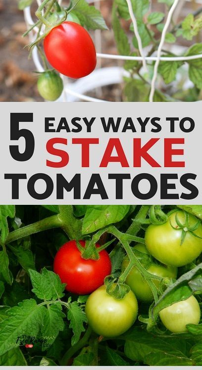 The 5 Best Ways To Stake Your Tomatoes Vegetable Garden