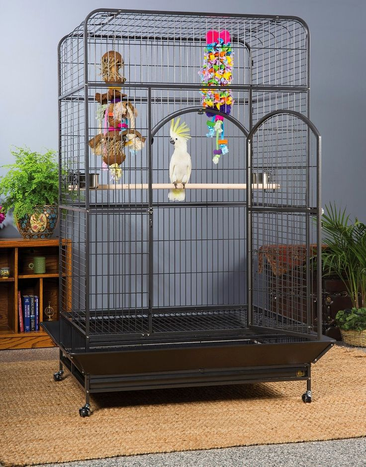 Best 25 Large Bird Cages Ideas On Pinterest Bird Cages