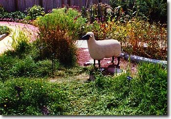 Rainbow Area: Milk, Meat and Wool Garden 4h