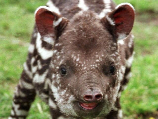 rainforest+animals+pictures | What is your favorite animal ...