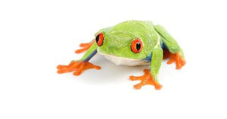 Ideas para hacer un disfraz de rana. Confeccionar un disfraz de rana requiere algunas prendas específicas que servirán como base del diseño. Al emplear ideas innovadoras, estos disfraces pueden variar desde piezas básicas a obras de arte elaboradas. Entre algunas de las ideas se encuentran las ranas de árbol, el príncipe rana y la Rana René. Puedes hacer disfraces de rana para todas ...