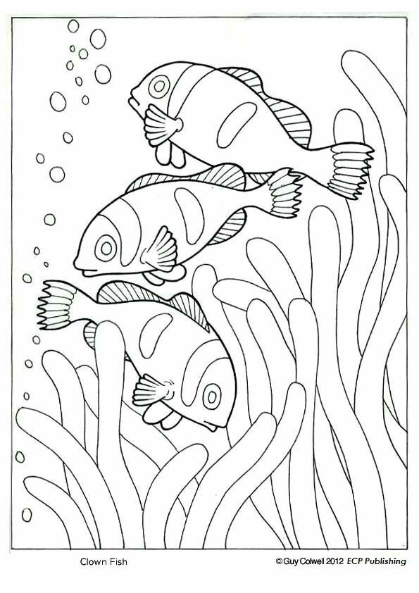 Clown Fish Coloring, Ocean Animal Coloring Pages By Dwilliamswood