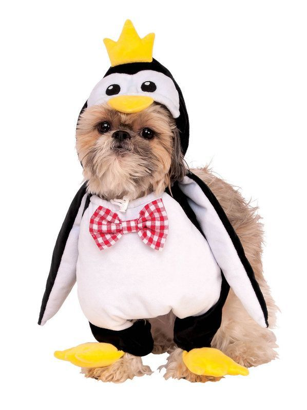 Check Out Walking Penguin Costume For Pet Dog And Cat Costumes
