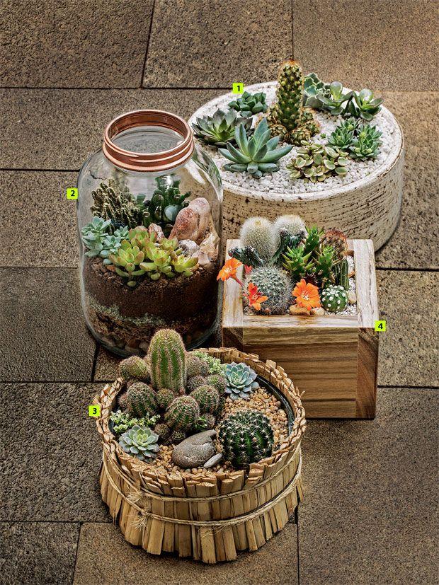 no Pinterest  Jardim de cactos, Terrário de cactus e Suculentas