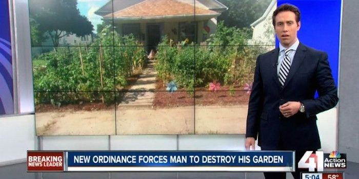 A family from the United States have been forced to destroy their vegetable garden due to new city zoning laws in the city of Sugar Cre...