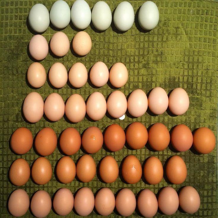 9 Best Javas Images On Pinterest  Chicken Coops, Java -3202