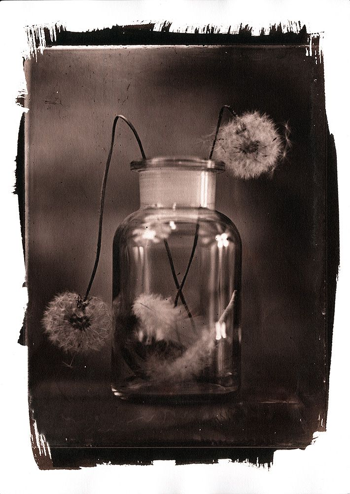VanDyke print from 18x24cm collodion wet plate glass negative
