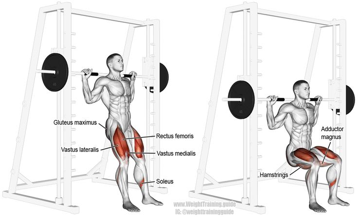 Smith chair squat. A compound exercise. Target muscle: Gluteus Maximus. Synergistic muscles: Hamstrings, Adductor Magnus, Soleus, Quadriceps. Visit site to learn how this exercise is different from the Smith and barbell squats.