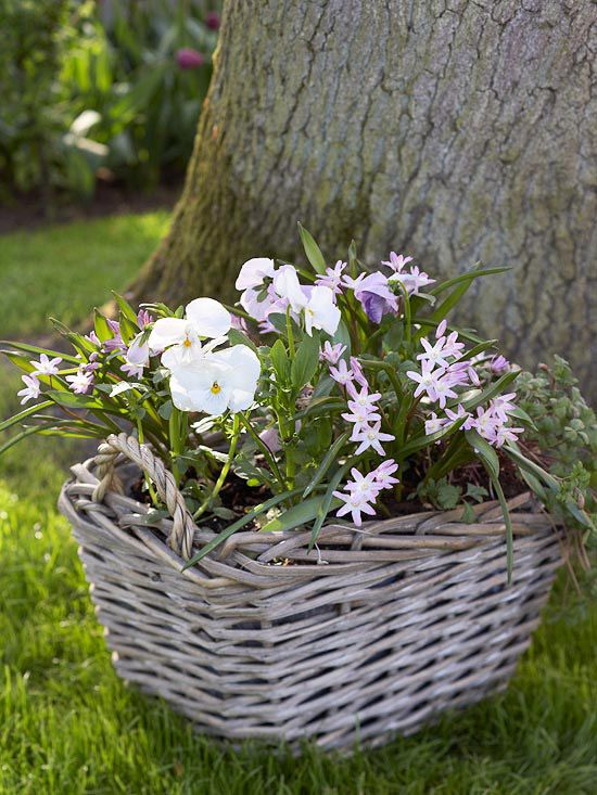 Enjoy a charming container garden with starry pink glory-of-the-snow weaving through pansies. Or go for a blue-on-blue look with indigo pansies and blue glory-of-the-snow. Line the basket with plastic that has a few holes cut in before planting to prevent soil from falling through the weave.