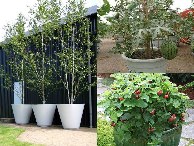 Il moderno giardinaggio urbano e l'intera orticoltura stanno trasformando il paesaggio delle città; terrazzi e cortili sono spesso pieni di piante che non si direbbe possano crescere in vaso. In re…
