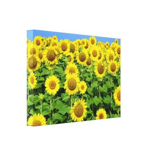 Sunflowers and Flower Art, Prints and Posters