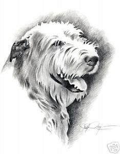 IRISH-WOLFHOUND-Dog-Drawing-ART-13-X-17-Signed-DJR