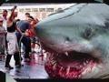Video - Hiu Terbesar Zaman Prasejarah - Megalodon Shark