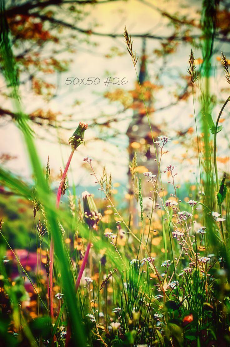 50×50 #26 The ladybugs morning