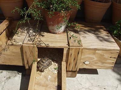 Idée de refuge-maison pour tortue originale. Je retiens.