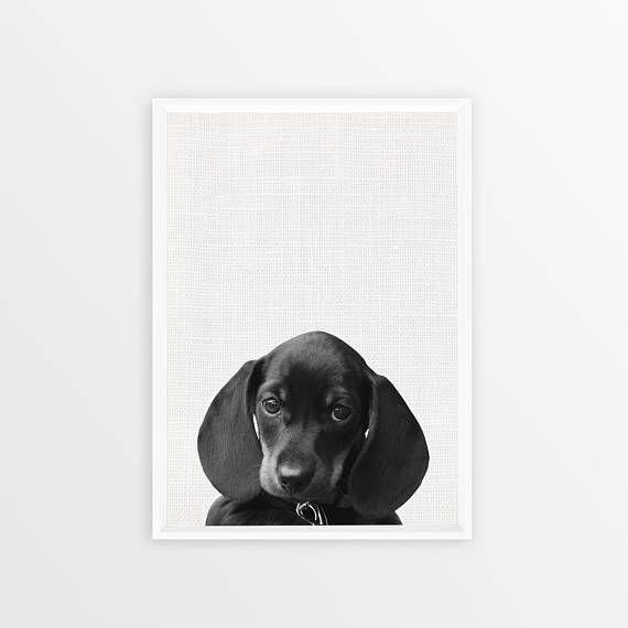 Dachshund Dog Print Dog Photo Black and White Peekaboo